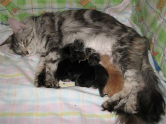 Contented mum with babies