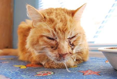 https://cat-world.com/images/cat-flu123.jpg