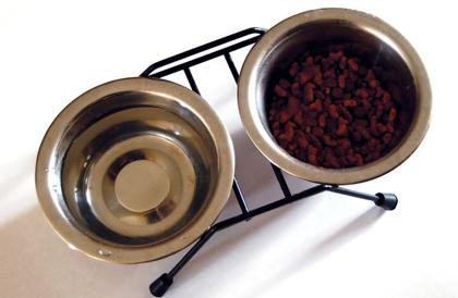 cat water bowl