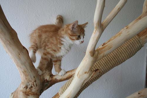 Keeping indoor cats happy