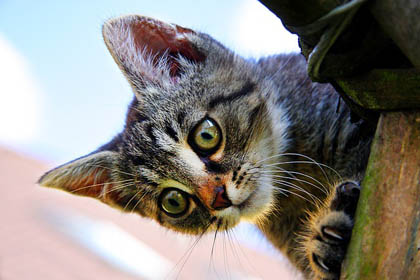 play aggression in cats