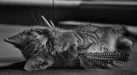 Eight week old kitten