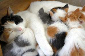 Mother cat and her kittens