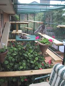 Cat Enclosures and Cat Fences (With Photos) 34