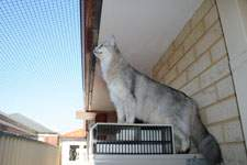 Cat Enclosures and Cat Fences (With Photos) 30