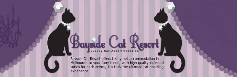 Bayside Cat Resort