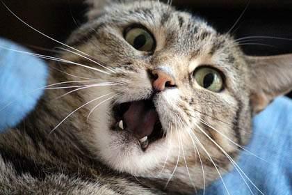 Teething in kittens