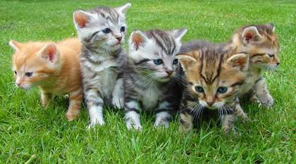 free kittens and cats