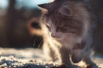 Cat Safety - How To Keep Your Cat Safe