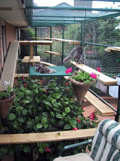Cat enclosures