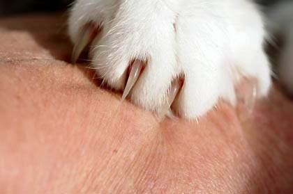 trimming your cat