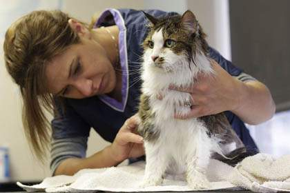 do you need to groom cats?