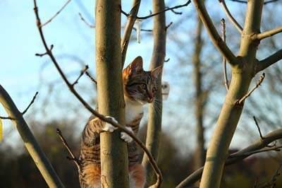 Cat climbing tree
