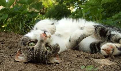 cat rolling