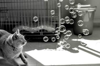 outdoor to indoor cats