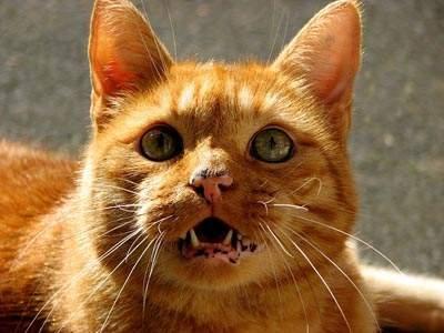 Lentigo in cats