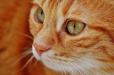 Signs of good health in cats