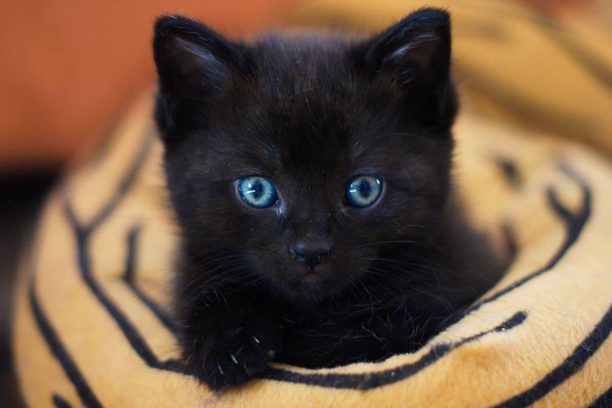 Kitten eye colour