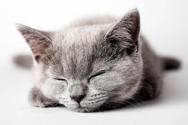 When do kittens open their eyes?