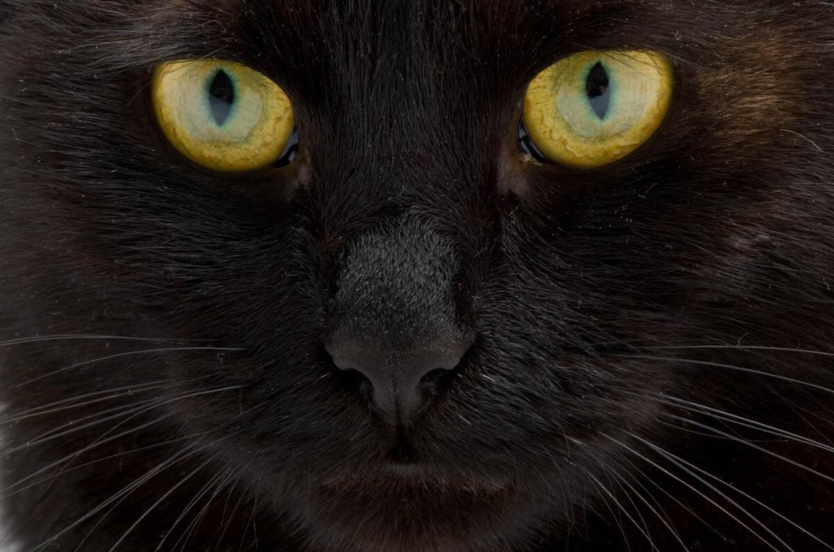 Dandruff in cats