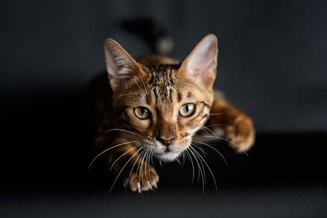Secondary poisoning in cats