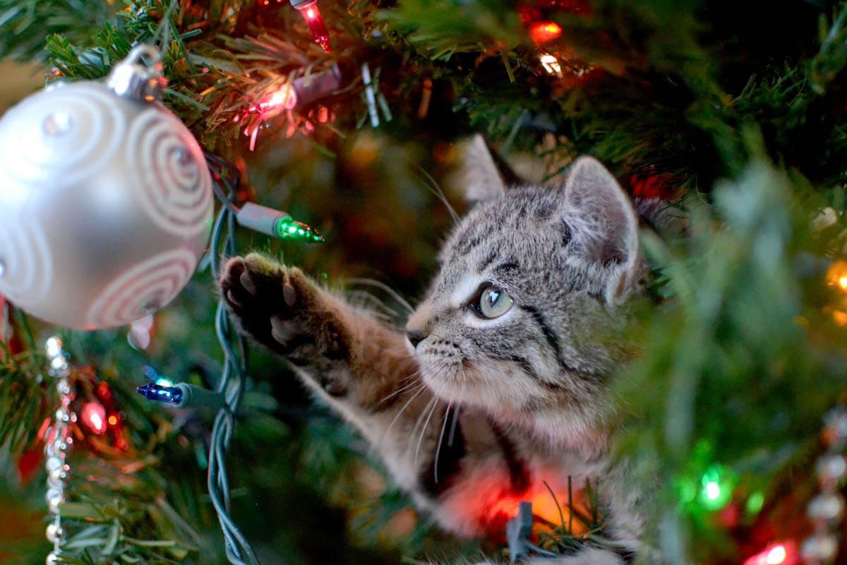 Keeping cats safe at Christmas