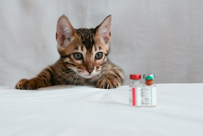 Kitten vaccination schedule