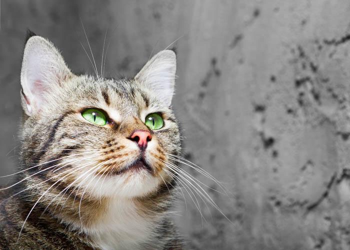 Pets and immunocompromised people