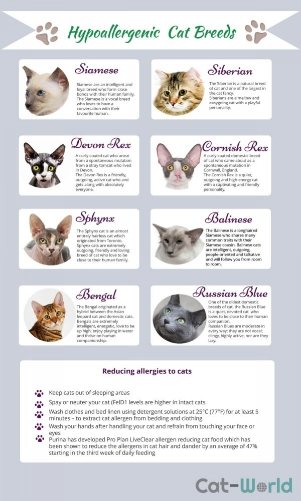 Hypoallergenic breeds of cat