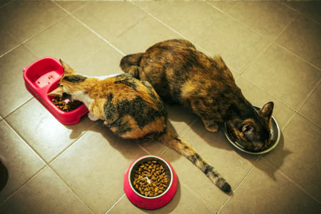 Should cats share a food bowl?