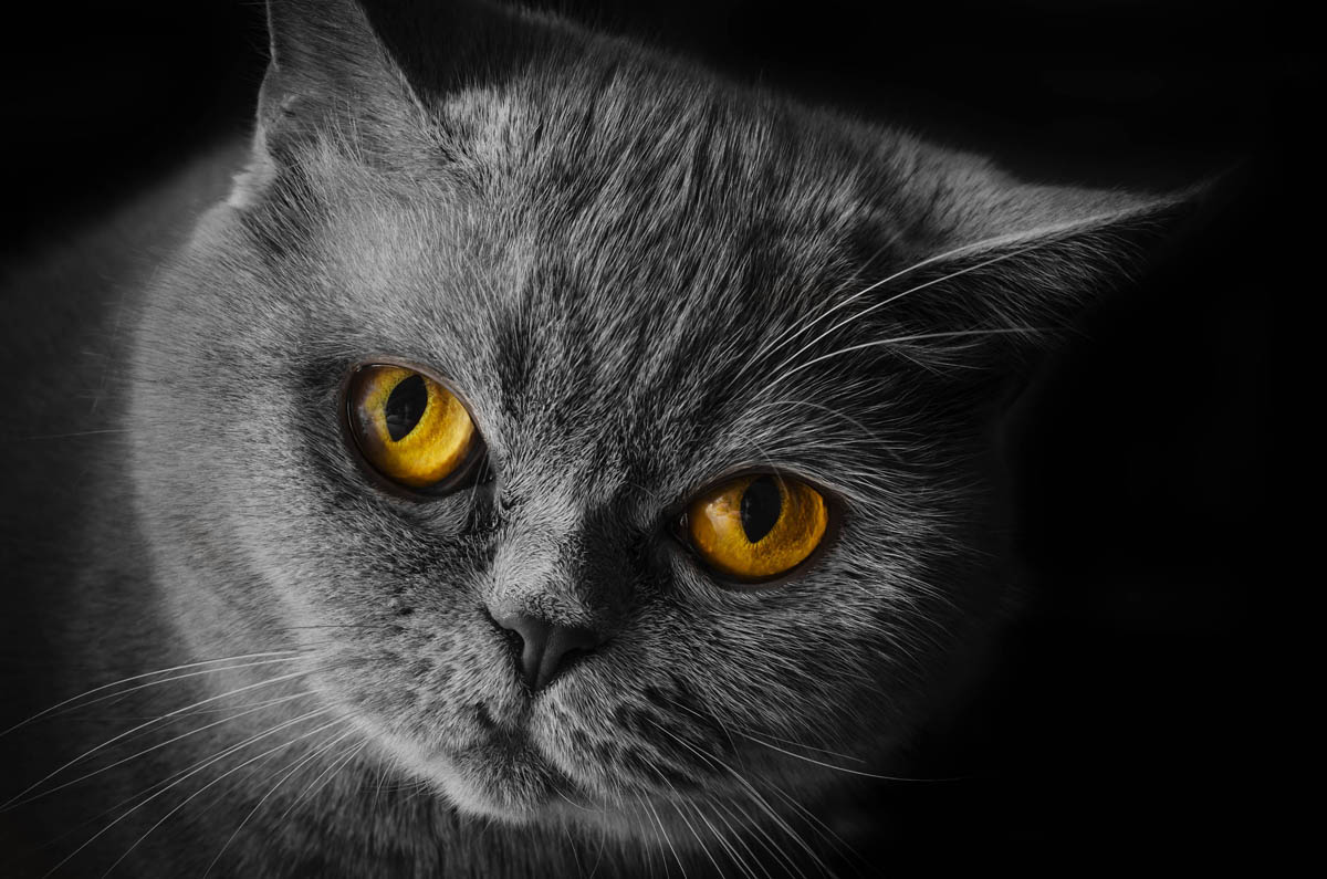 Caring for an immunocompromised cat