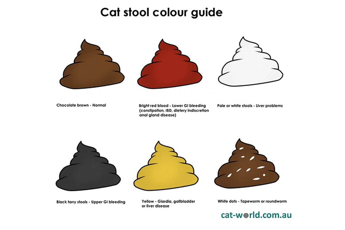 Cat stool colour guide