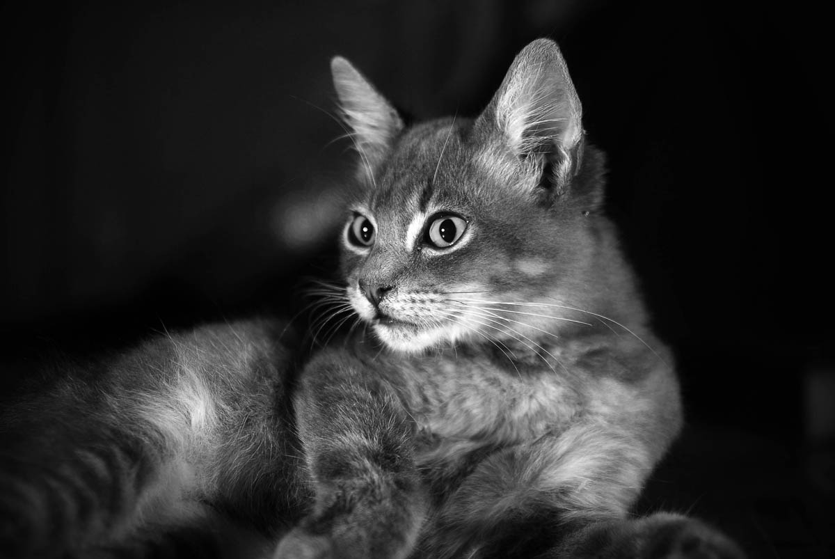 Do cats fart?