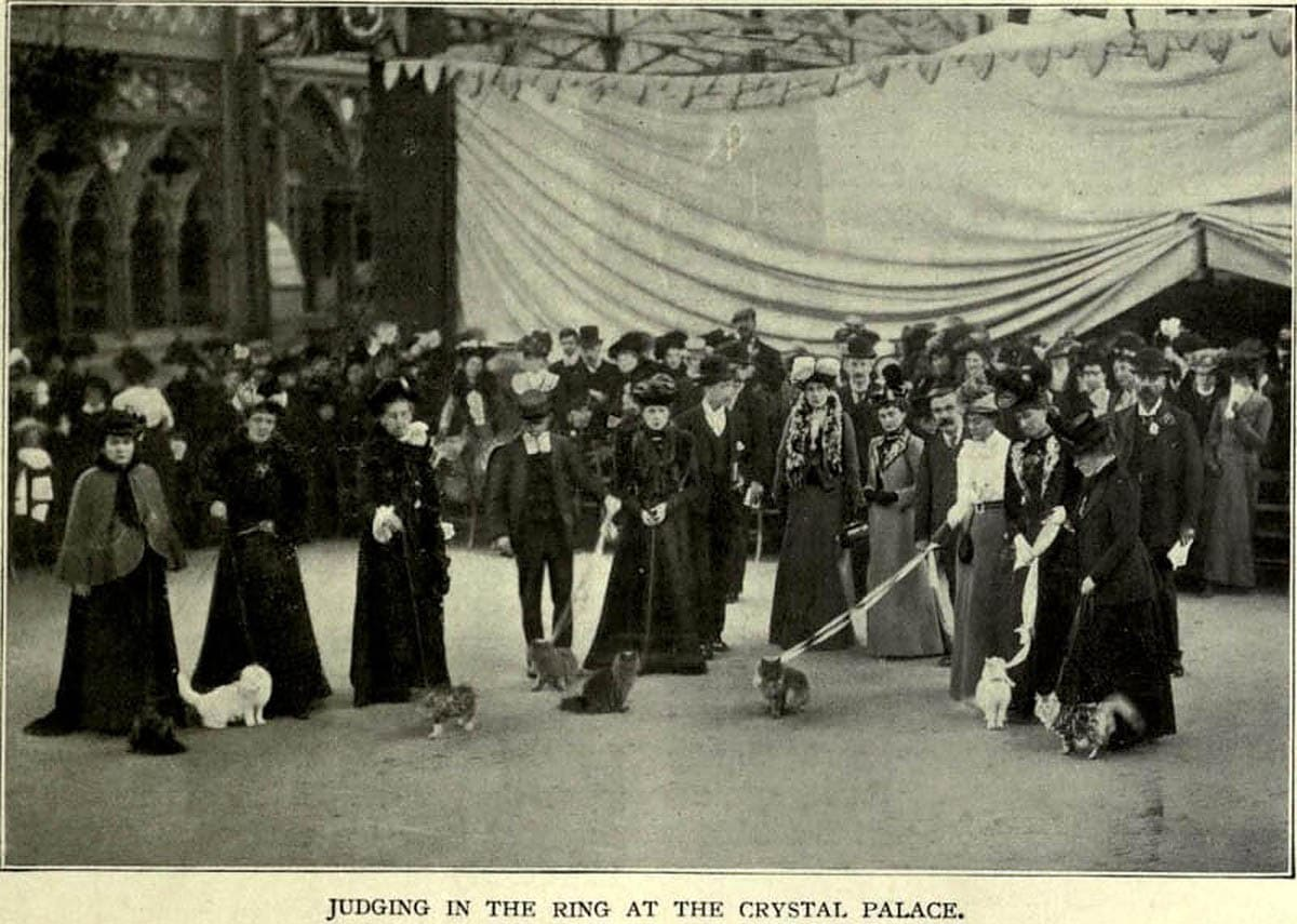 First cat show held  at Crystal palace