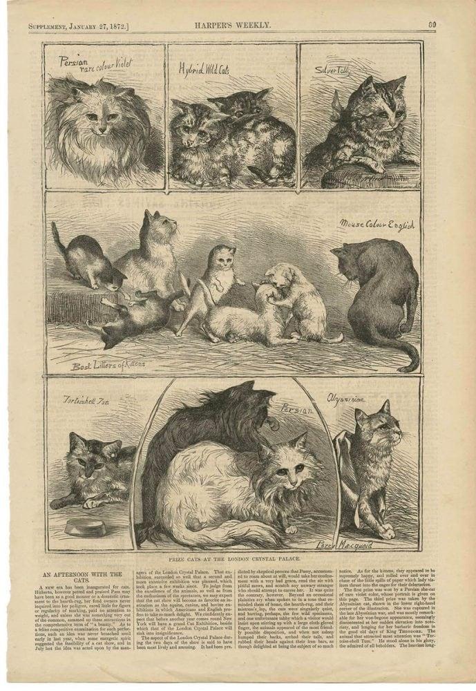 History of Cat Breeds 1