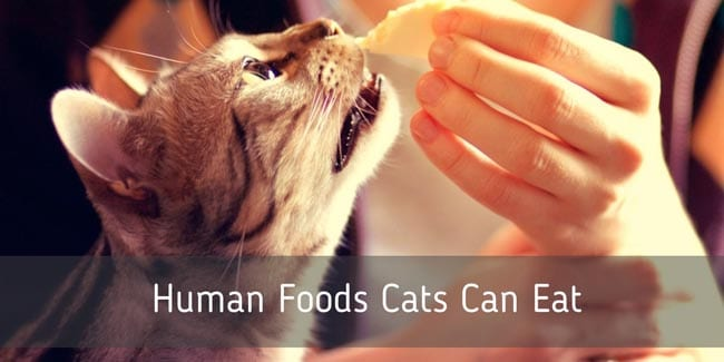 Human foods cats can't eat