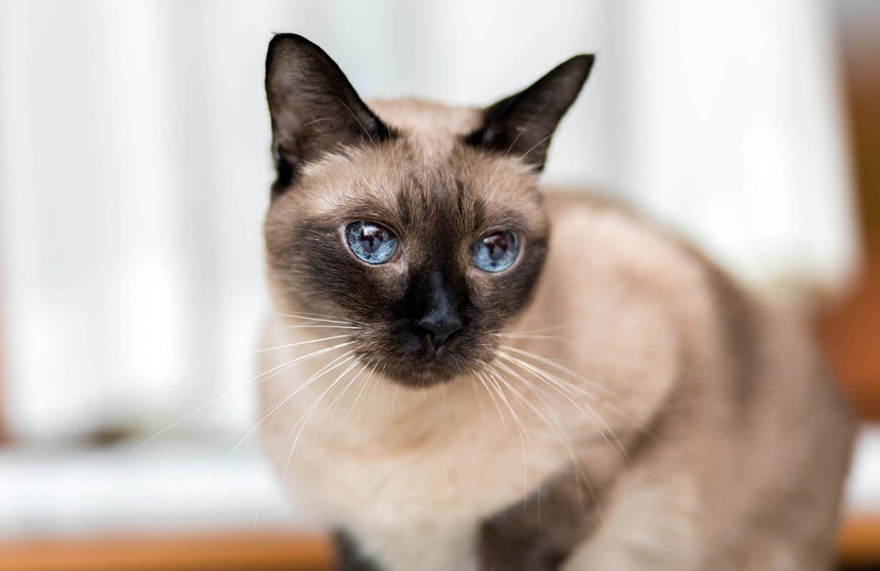 Kitten or adult cat