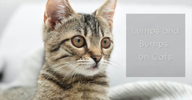 Lumps and bumps on cats
