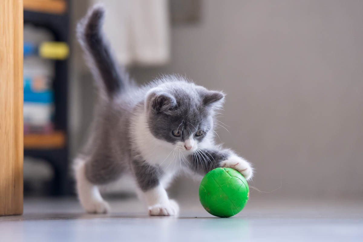 Provide plenty of opportunity for a kitten to play
