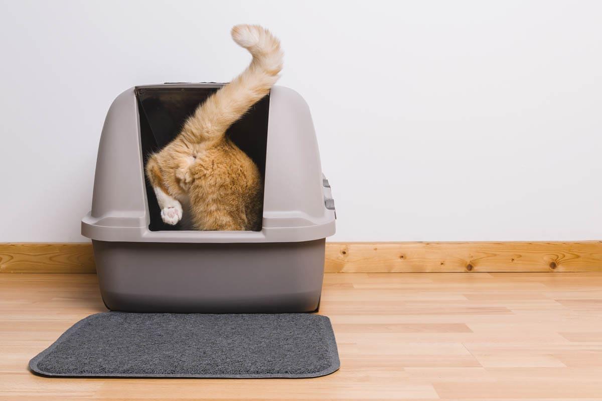 The scoop on cat poop