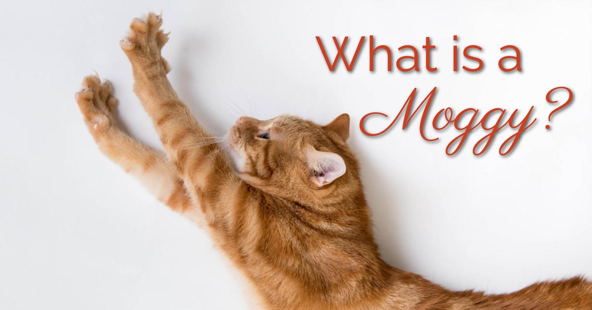 What is a moggy?