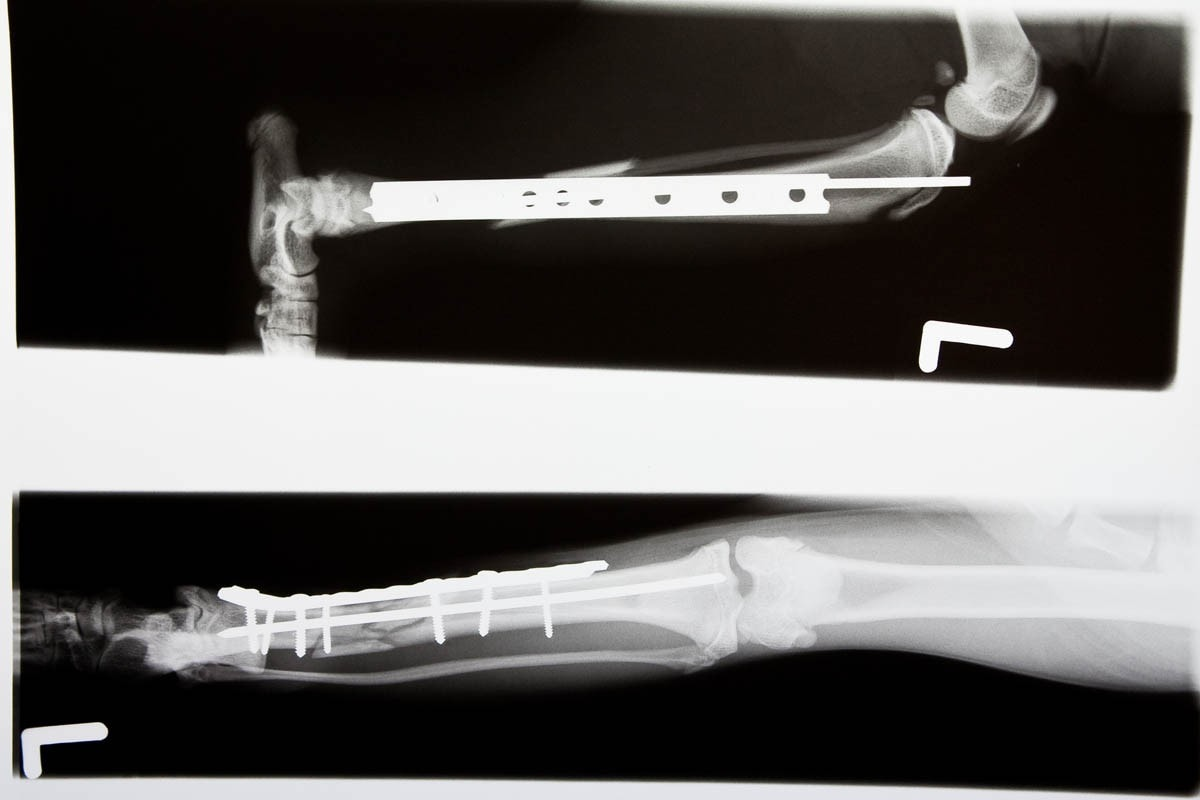 Internal fixation on a broken cat's leg