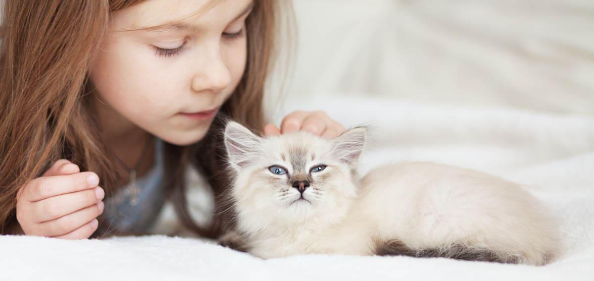 Child friendly cat breeds