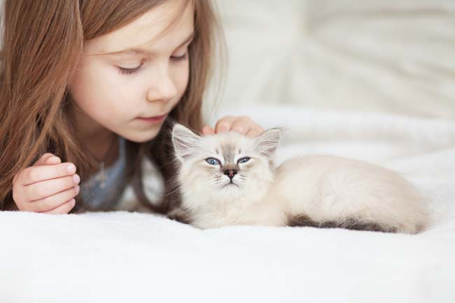 Child friendly cat breeds
