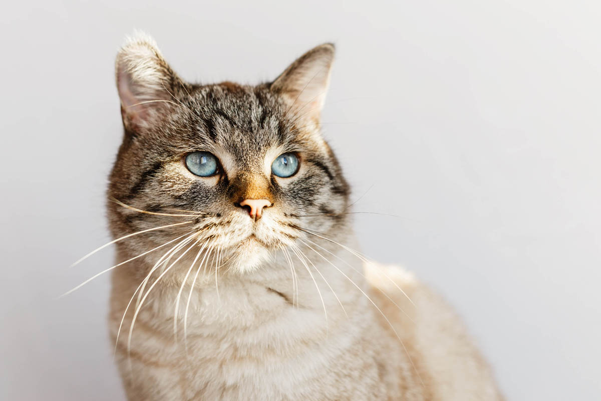 Uremia in cats
