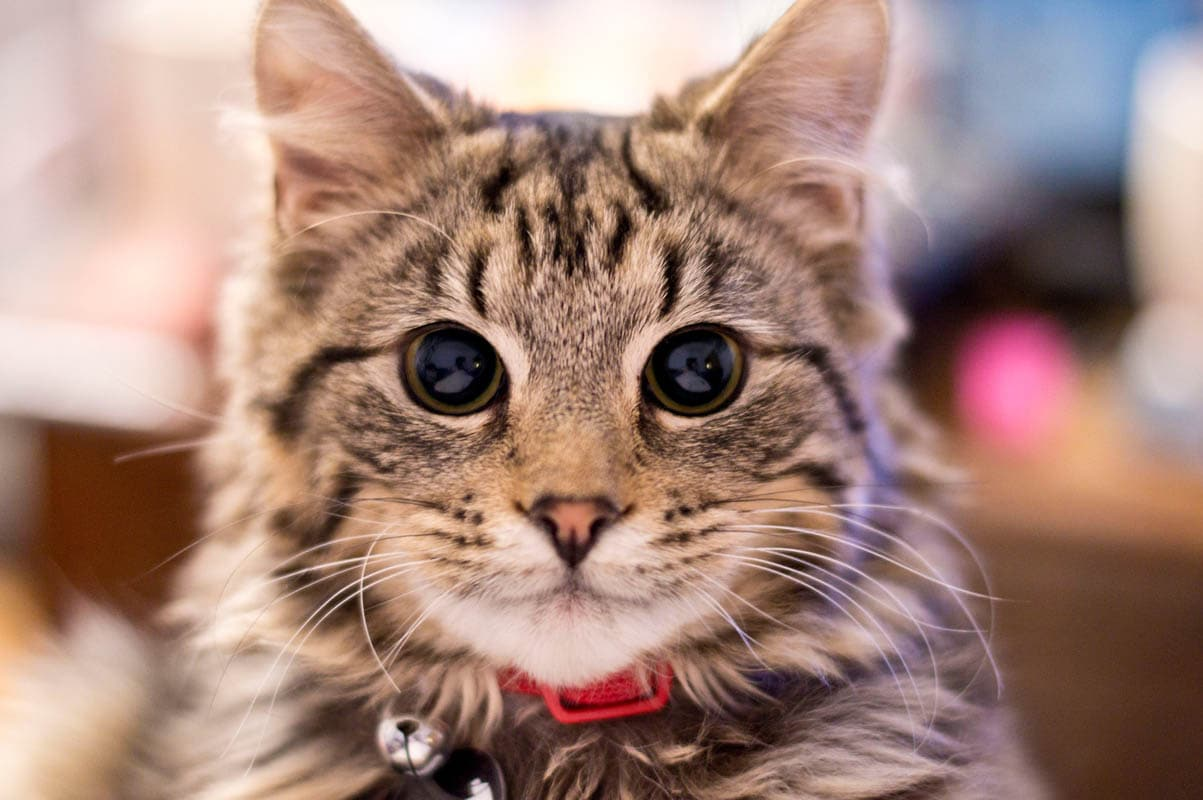 What's involved in caring for a cat?