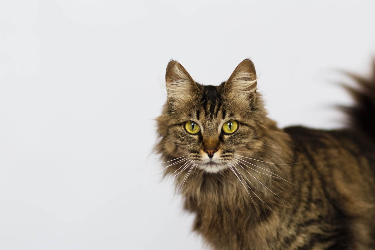 Where to adopt a cat