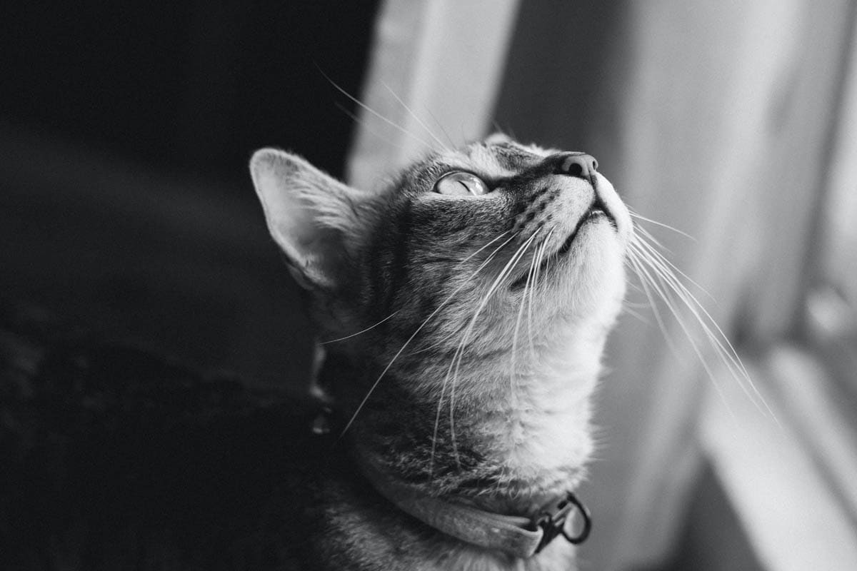 All about your cat's whiskers
