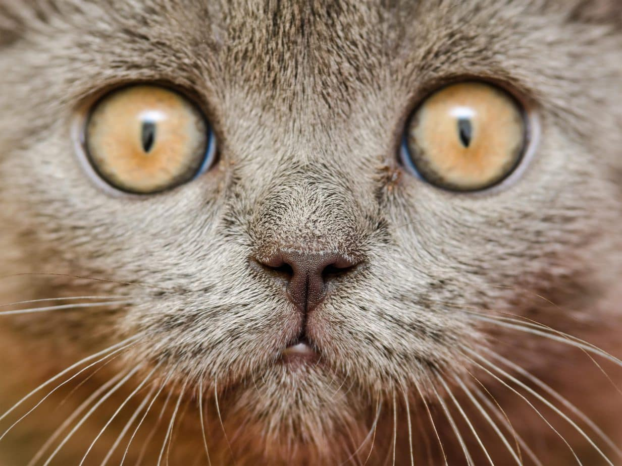Close up of a cat's face