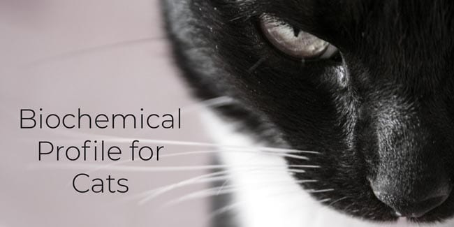 Biochemical profile for cats